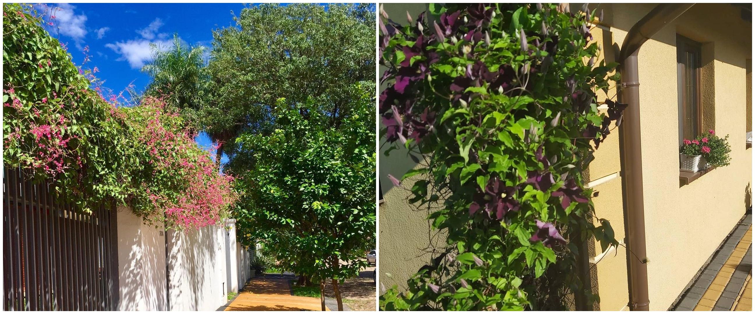 10 Tanaman hias daun untuk pagar, bikin rumah makin sejuk