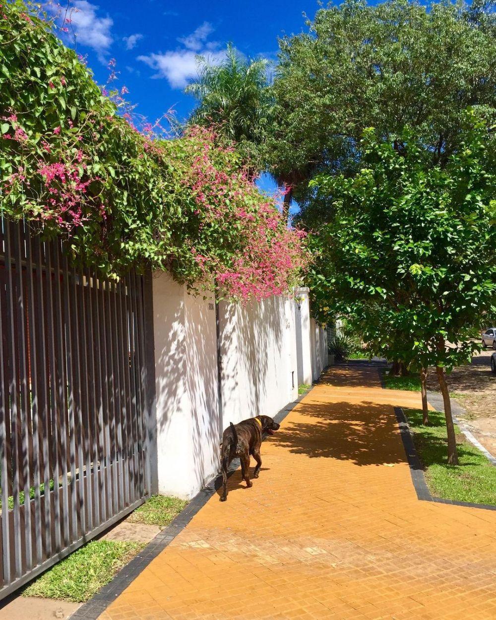 tanaman hias daun pagar © Instagram