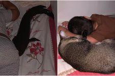 Viral ikan gabus peliharaan suka tidur di kasur, bikin melongo