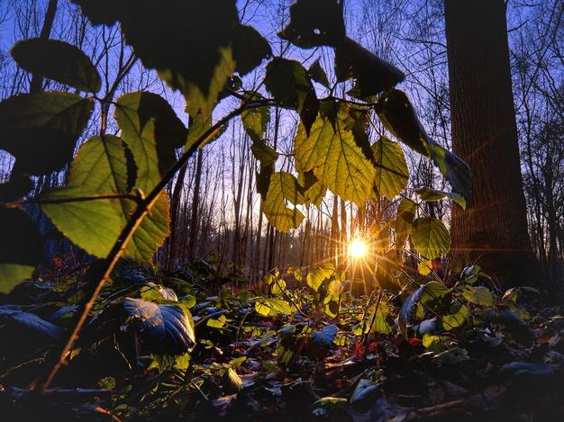 Cara merawat aglonema silver king © Istimewa
