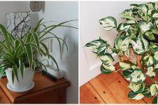 10 Tanaman hias daun indoor, mudah dirawat dan bikin rumah cantik