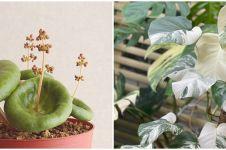 10 Tanaman hias daun unik dan populer, cocok untuk hiasan rumah