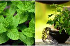7 Tanaman obat asma yang efektif dan manjur