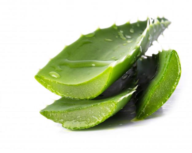 Tanaman obat gatal kulit freepik.com