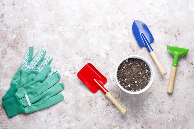 Cara merawat tanaman hias janda bolong outdoor © Istimewa