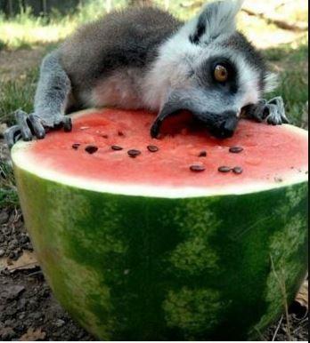 potret absurd hewan pas makan Berbagai sumber