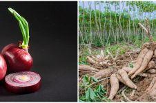 6 Tanaman obat jenis umbi-umbian beserta nutrisi dan manfaatnya