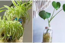 10 Tanaman hidroponik yang mudah ditanam di dalam rumah
