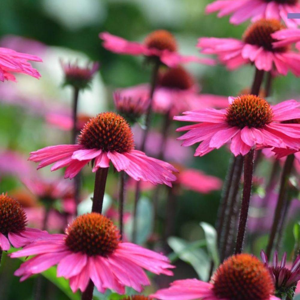 tanaman herbal obat flu © Instagram