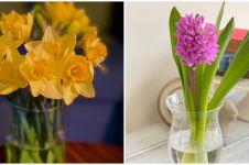 10 Tanaman hidroponik bunga, bikin rumah makin segar dan asri