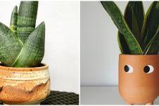 10 Jenis tanaman lidah mertua yang bisa dirawat indoor