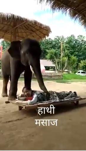 pijat dengan gajah Berbagai sumber