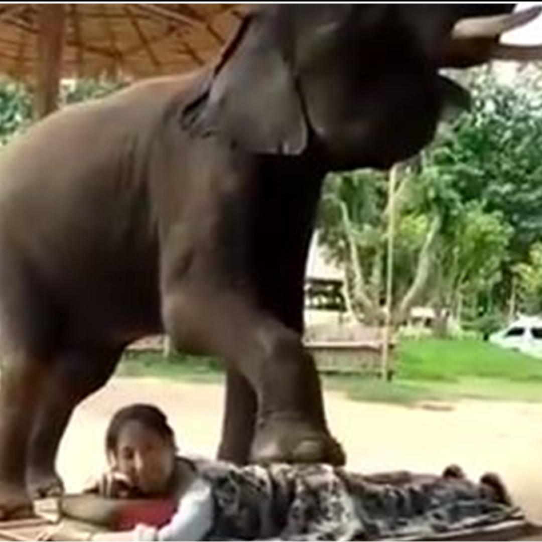 Ekstrem, terapi pijat dengan diinjak gajah