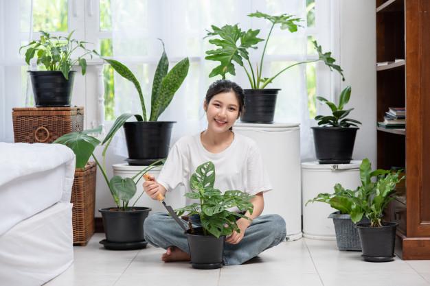 Manfaat tanaman hias gantung freepik © 2021 brilio.net