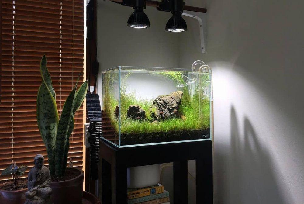 hidroponik akuarium ©Instagram