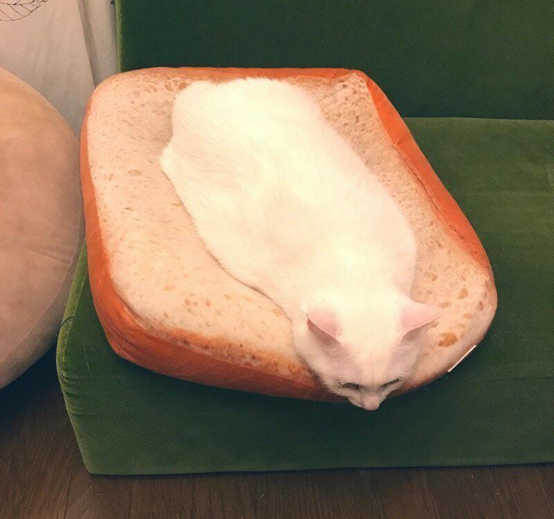 hewan seperti makanan © Berbagai Sumber