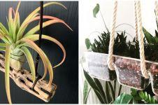 10 Tanaman hidroponik gantung, cocok buat indoor dan outdoor