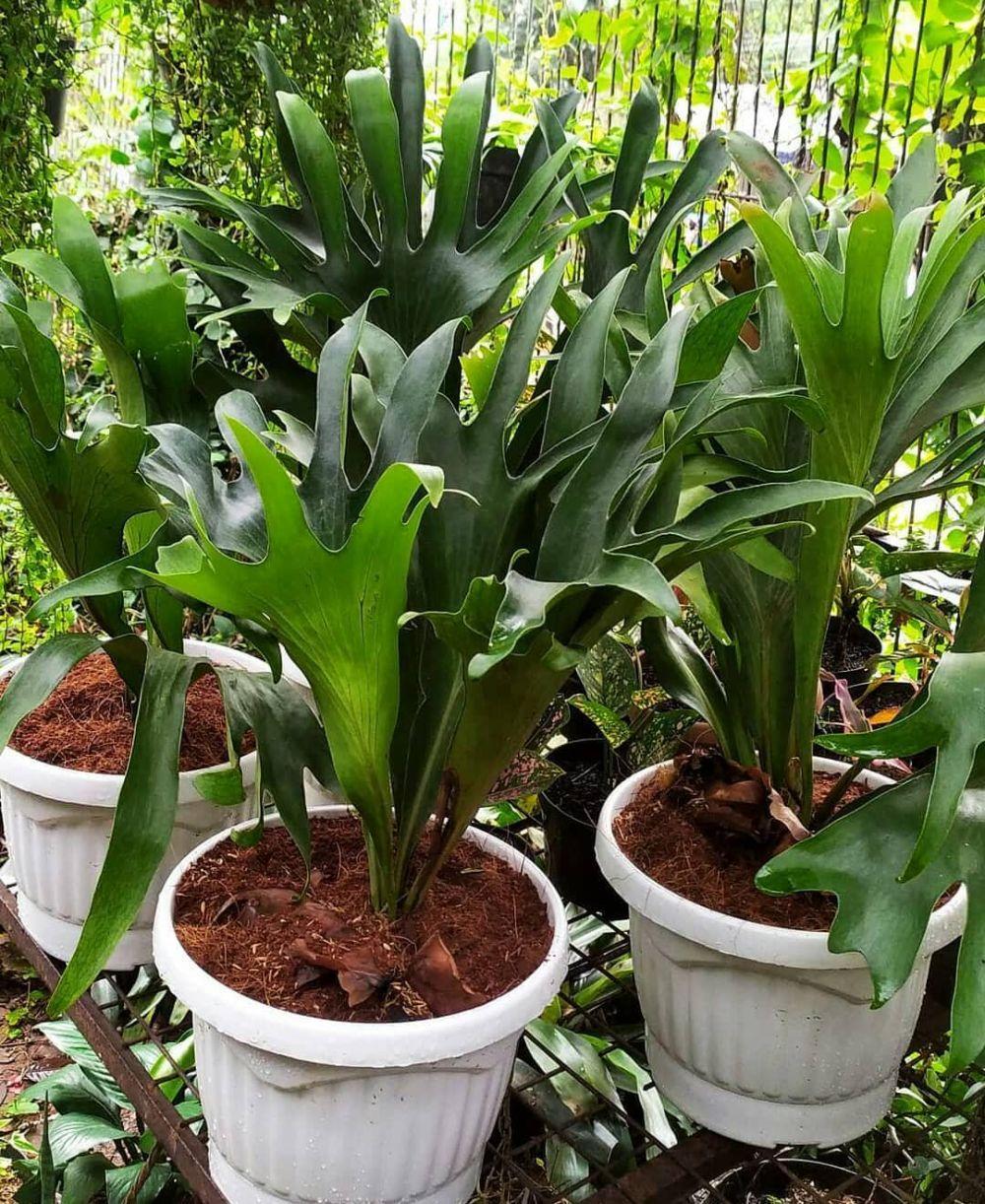 Cara merawat tanaman hias gantung pakis instagram ; freepik © 2021 brilio.net