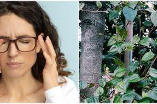 10 Tanaman obat untuk mata, makin sehat dan jernih