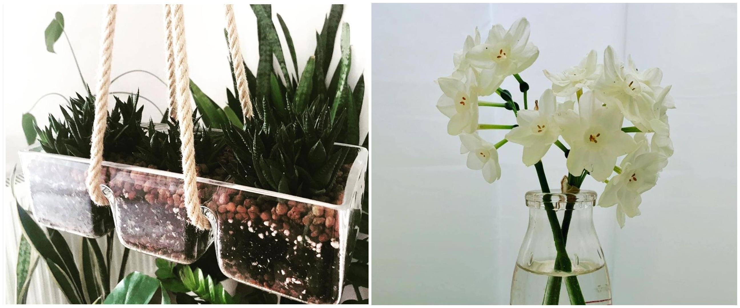 5 Penyebab dan cara mengatasi tanaman hidroponik kuning