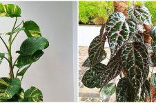 7 Tanaman hias daun merambat, cantik dan mudah ditanam