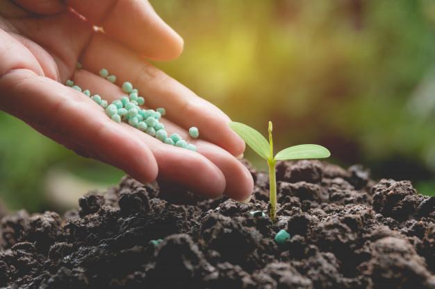 Cara merawat tanaman hias daun Instagram ; freepik © 2021 brilio.net