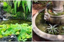 10 Tanaman hidroponik yang tahan panas, cantik jadi hiasan outdoor