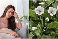 9 Tanaman obat dari akar dan khasiatnya untuk kesehatan