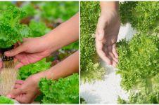 6 Alat penting untuk tanaman hidroponik bagi pemula