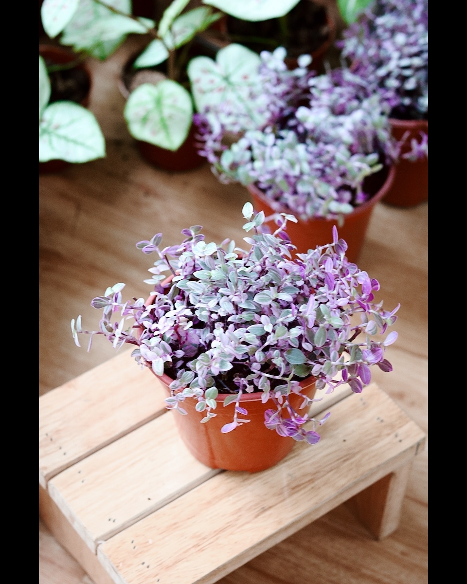 Cara merawat tanaman gantung kribo Instagram ; freepik © 2021 brilio.net