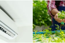 5 Manfaat air AC untuk tanaman hidroponik jadi lebih sehat