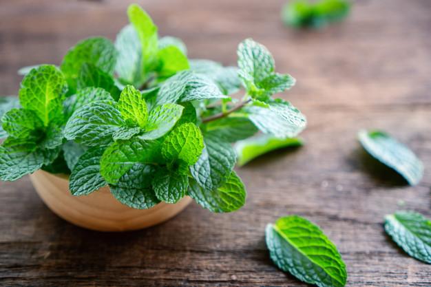 Cara menanam tanaman hias daun mint dari batang pixabay ; freepik © 2021 brilio.net