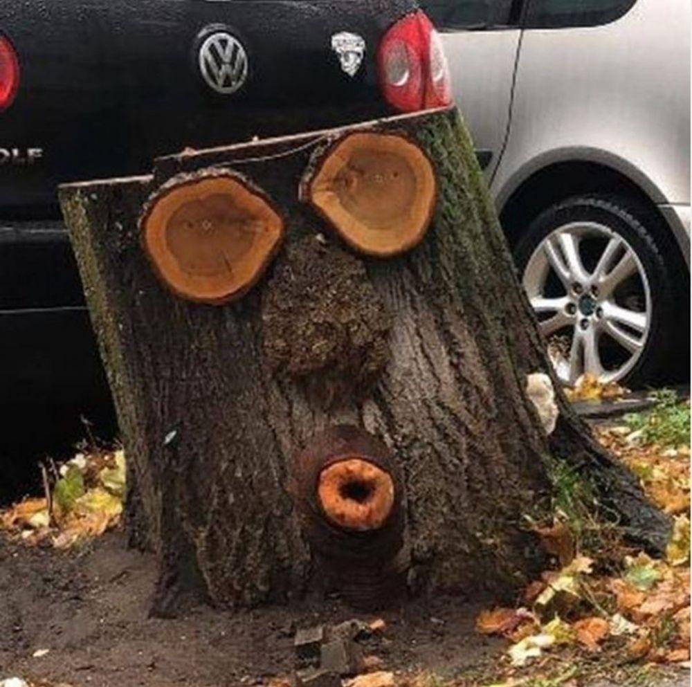 pohon nggak biasa © Instagram