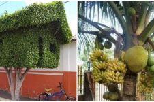 10 Potret pohon nggak biasa, bentuk absurdnya bikin cekikikan