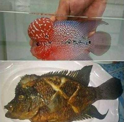 sajian olahan ikan absurd Berbagai sumber