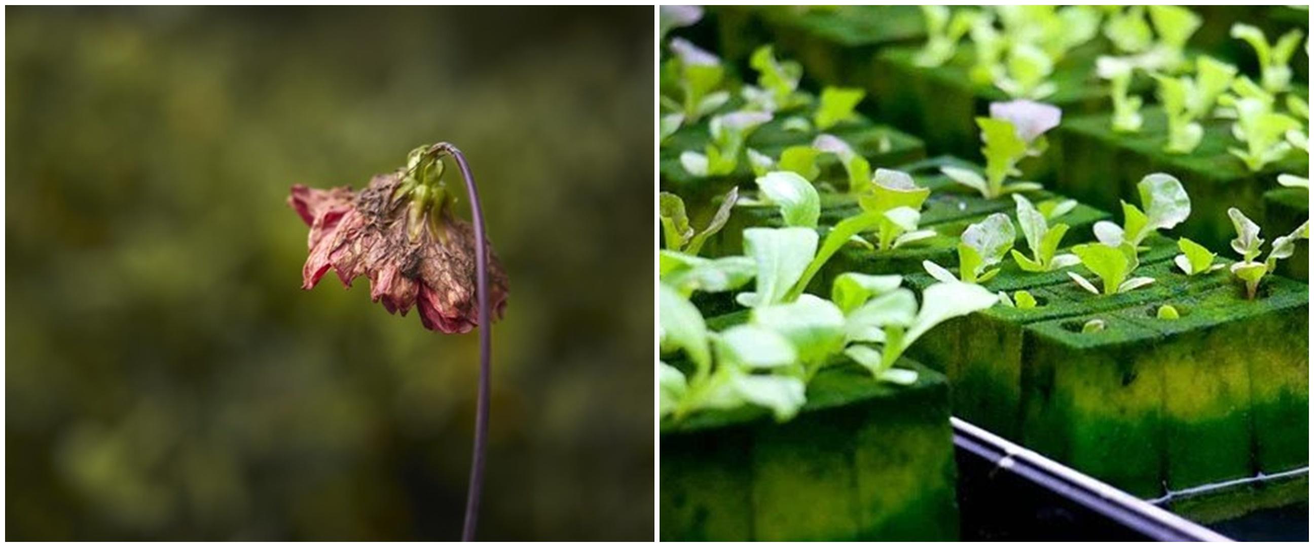 7 Kesalahan ini membuat tanaman hidroponik tidak berkembang