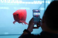 5 Fakta pameran dan kompetisi Arwana, ikan hias terbaik di dunia