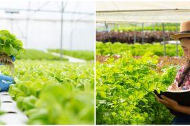 8 Jenis sistem tanaman hidroponik serta kelebihan dan kekurangan