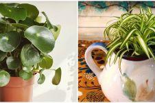 7 Tanaman hias daun hijau kecil, unik dan cocok untuk pot mini