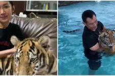 10 Potret Kenzo harimau yang dipelihara bebas di rumah hunian keluarga