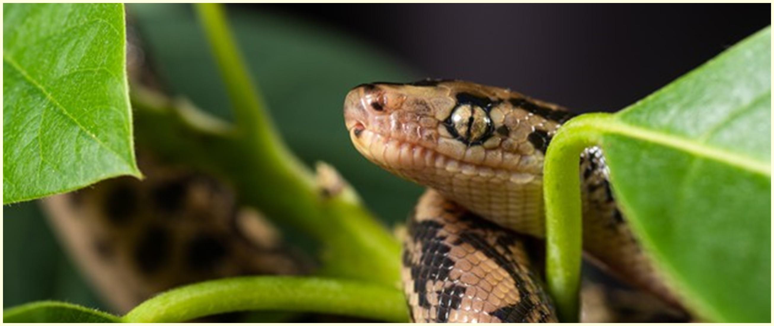 9 Tanaman pengusir ular paling ampuh, ada lidah mertua sampai lavender