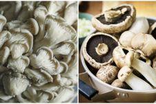 Cara menanam jamur hidroponik, mudah dan praktis