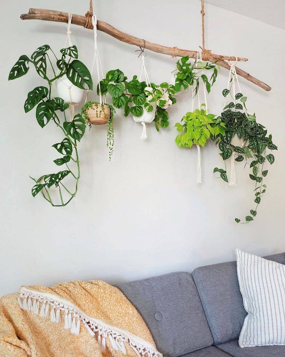Cara menata tanaman hias gantung untuk percantik taman Instagram © 2021 brilio.net
