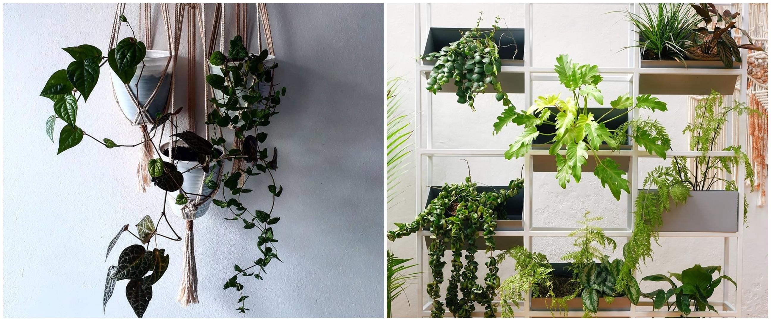 5 Cara menata tanaman hias gantung untuk perindah rumah