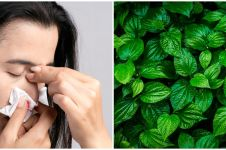 8 Tanaman obat bantu atasi mimisan, ada daun sirih