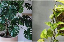 9 Tanaman hias daun untuk teras, rumah semakin asri