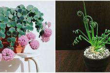6 Jenis tanaman hias langka yang cantik dan unik