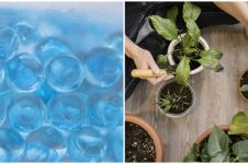 Kelebihan menanam menggunakan hidrogel beserta kekurangannya