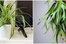 6 Tanaman hias daun lancip, dapat memperindah rumah