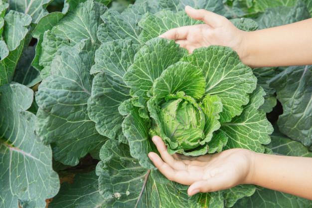 Masalah dan gangguan pada tanaman hidroponik © freepik.com